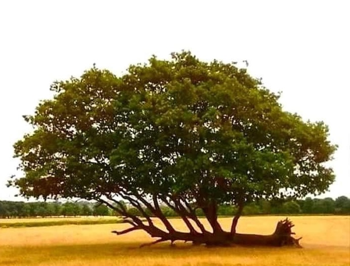 This Tree Fell Years Ago & Never Gave Up